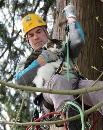 tree-climb