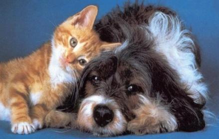 Dog:Cat42
