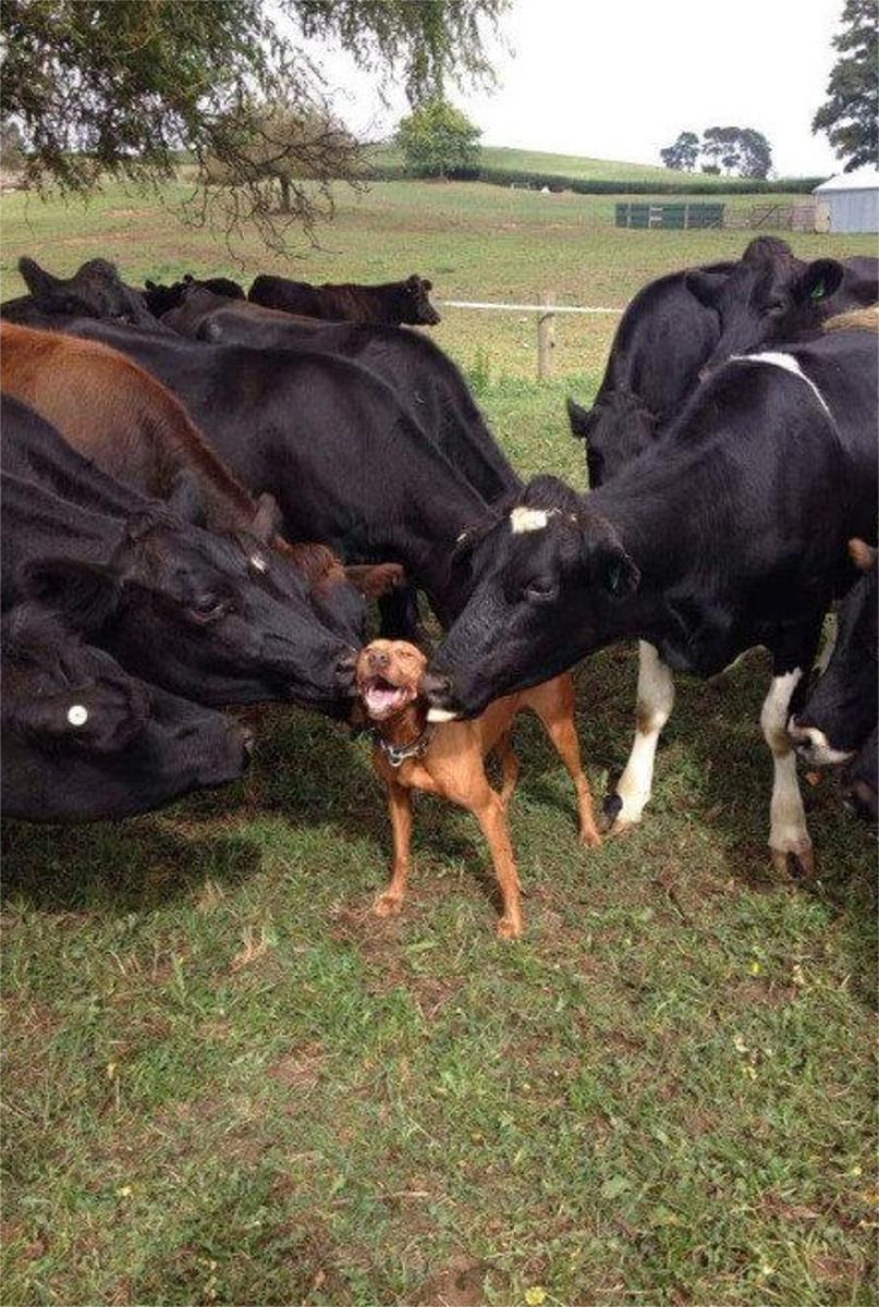 21116Amazing Dogs04