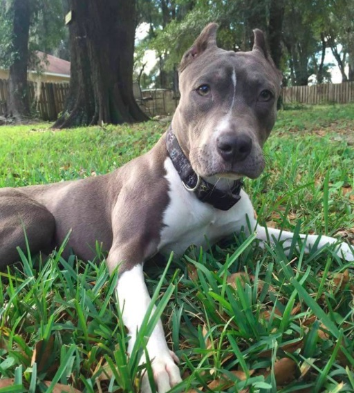 King:PassionforPits