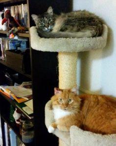 Celeste and JupiterCA