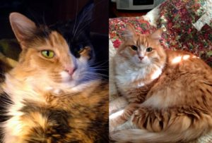 Miss Emma Jean Kitty_Alex-side