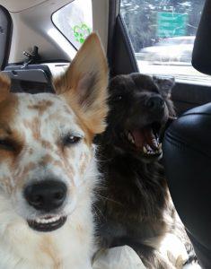 Lola and Nitro