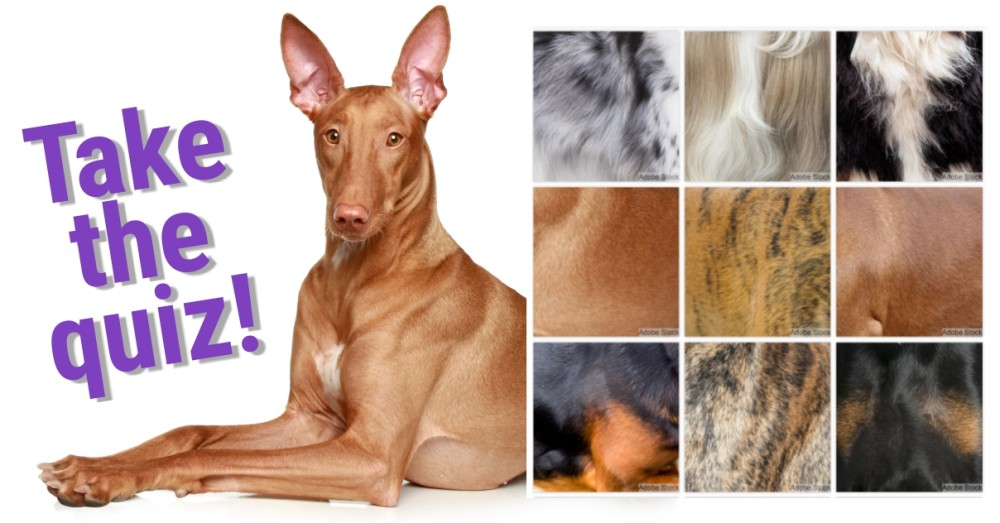 Can You Identify the Dog by Its Fur? – Freekibble