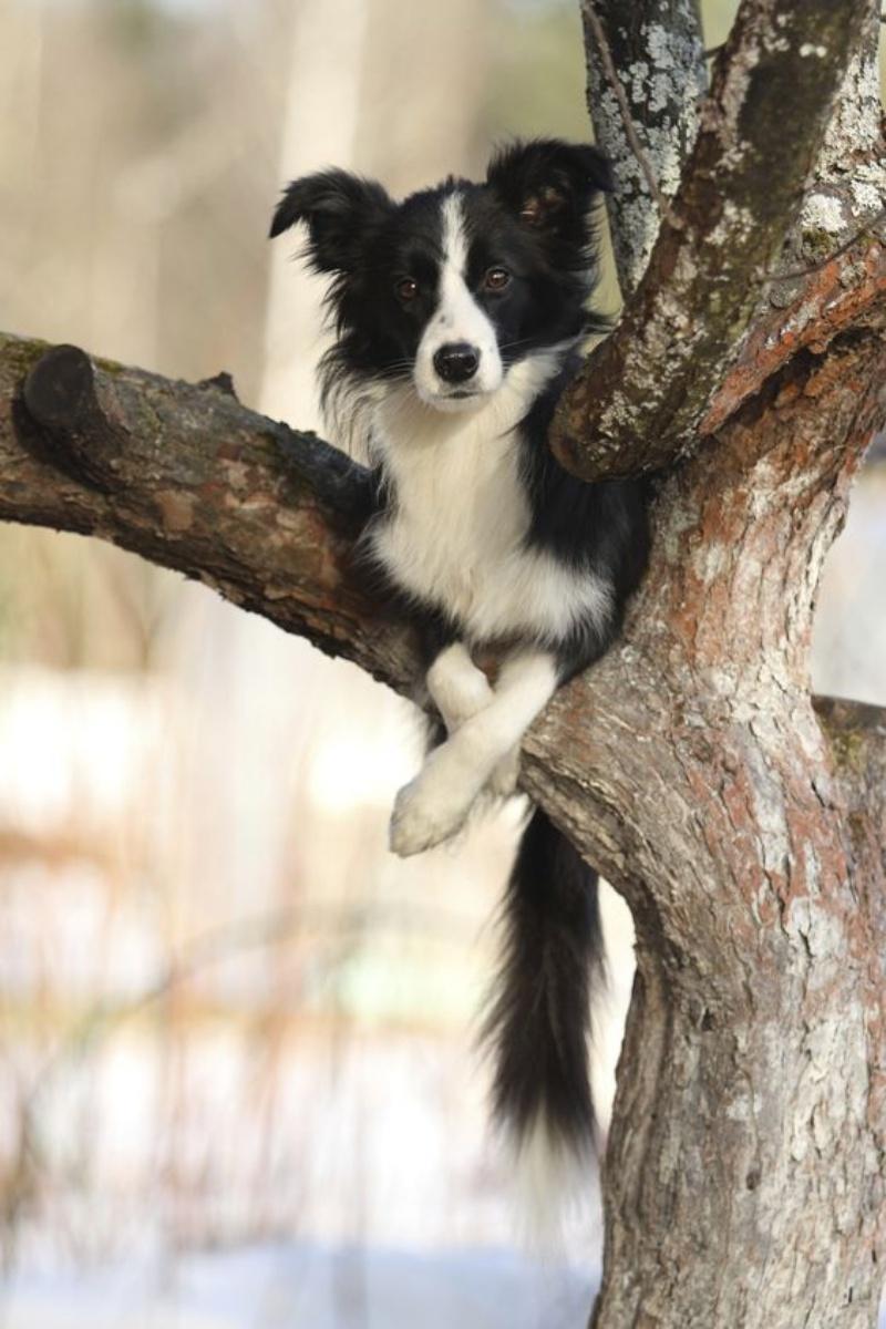 78c0e04afe3c9d Amazing Dogs – Freekibble