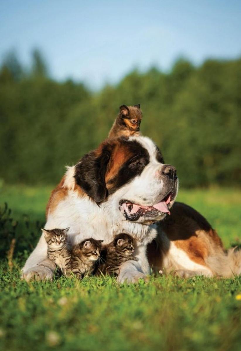 dogkittens