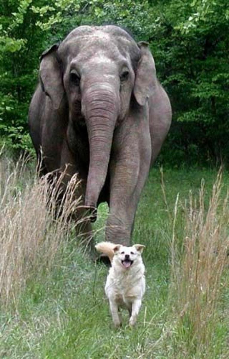 elephantdog