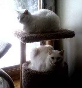 howie-huey-on-kitty-condo