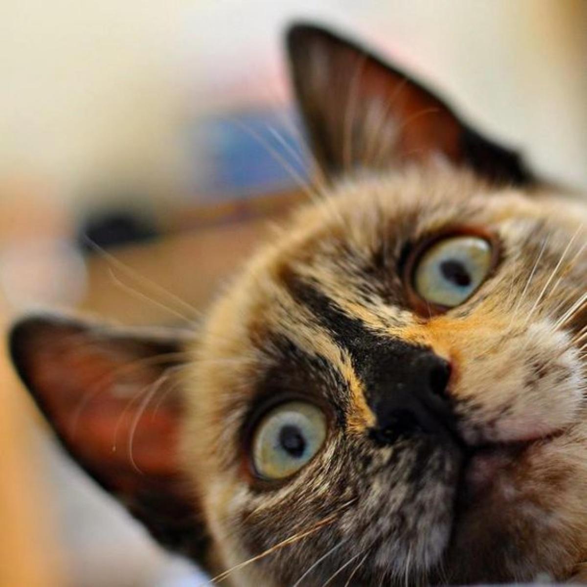 Amazing Cat: Amazing Cats